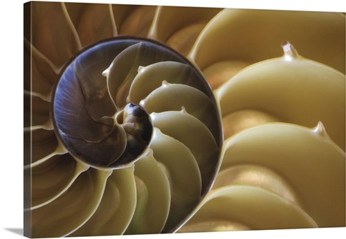 Georgia Abstract Of A Nautilus Shell Wall Art Canvas Prints Framed Prints Wall Peels Great Big Canvas