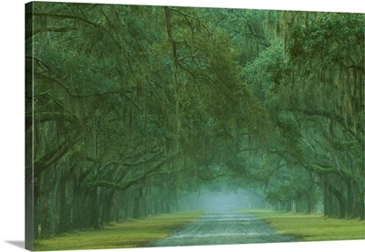 Georgia, Oak lined drive at Historic Wormsloe Plantation near Savannah