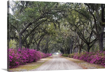 Georgia, Savannah. Bonaventure Cemetery with Azaleas blooming in Savannah Georgia
