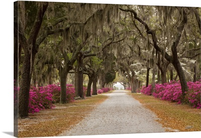 Georgia, Savannah, Drive in Historic Bonaventure Cemetery in the spring