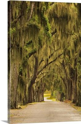 Georgia, Savannah, Entrance drive to Bethesda School in Savannah