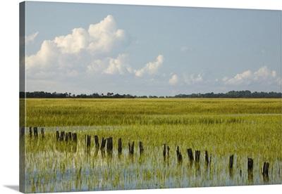 Georgia, Savannah, Tidal marsh with pilings