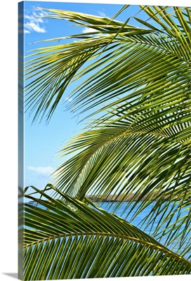 Grenada. Palm trees on beach