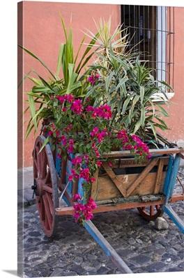 Guatemala, plants in a cart on street in Antigua