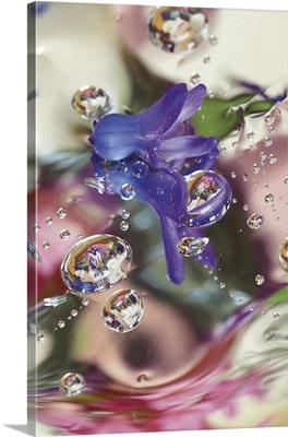 Hyacinth Bud on Mylar With Reflections