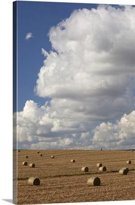 IA, Jackson County, Baled corn stalks