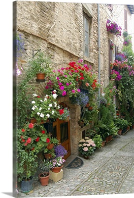 Italy, Umbria, Spello. Flowers adorn the narrow cobblestone streets