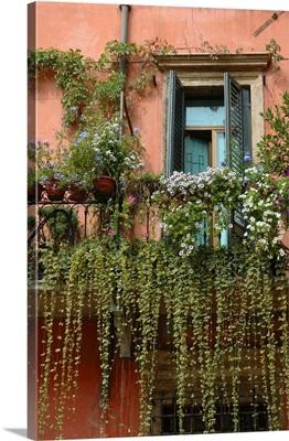 Italy, Verona, balcony garden in historic town center