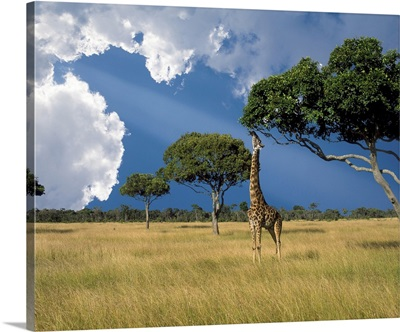 Kenya, Masai Mara Conservancy