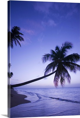 Lone palm tree at sunset, Coconut Grove beach at Cade's Bay