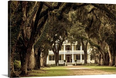 Louisiana, St. Francisville. Rosedown Planatation, oak tree canopy driveway