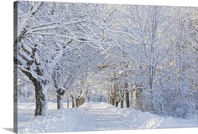 Maine, Harpswell. Heavy snowfall on Bear Paw Road