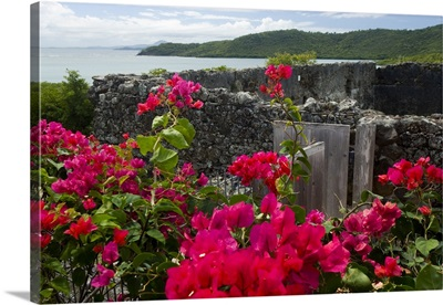 Martinique, French Antilles, Flowering bougainvillea and ruins
