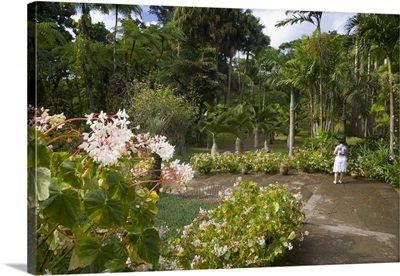 Martinique, French Antilles, West Indies, Jardin de Balata