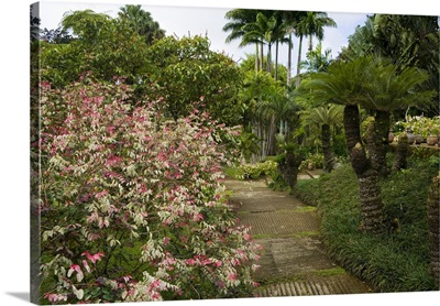 Martinique, French Antilles, West Indies, Walkway at Jardin de Balata