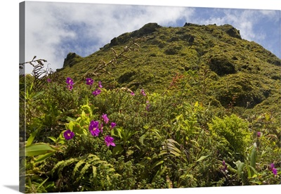 Martinique, French West Indies, Low-growing, lush vegetation on Mt. Pelee