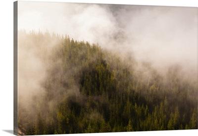 Mist Over The Trees In Squamish, British Columbia, Canada
