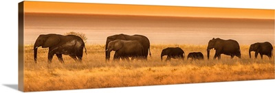 Namibia, Africa. Elephants walk in a line at sunset