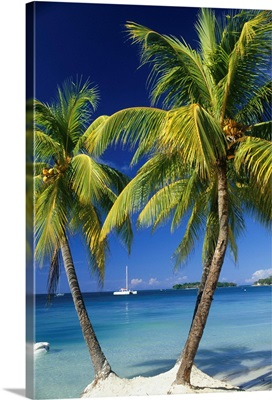 Negril, Jamaica, three palm trees at the edge of the blue sea with catamaran