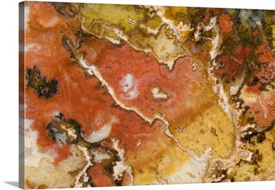 Oregon. Close-up of Graveyard Point Plume Agate stone