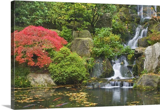 waterfall flows into koi pond at portland japanese garden - Japanese Koi Garden