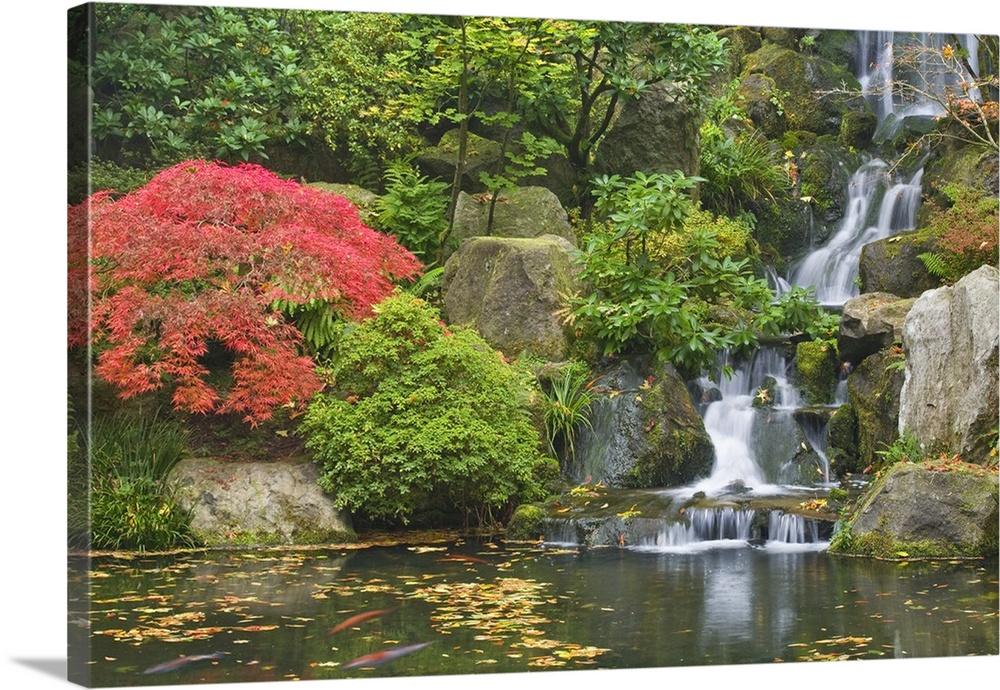 Waterfall Flows Into Koi Pond At Portland Japanese Garden