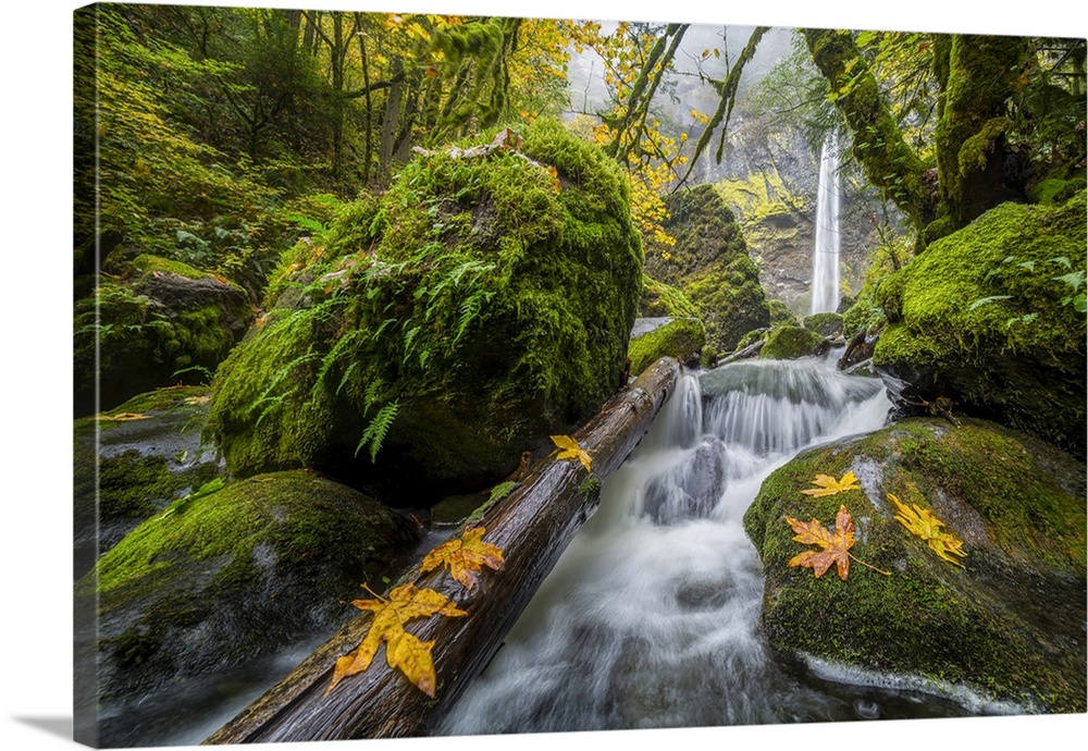 Oregon. View from below Elowah Falls on McCord Creek in autumn in the Columbia Gorge