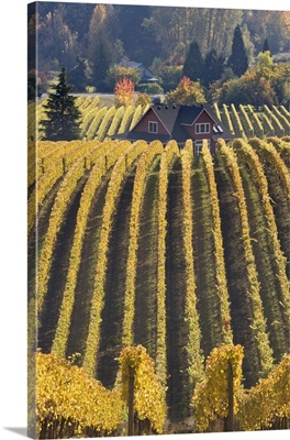 Oregon, Willamette River Valley. Vineyard patterns and buildings of Sokol Blosser Winery