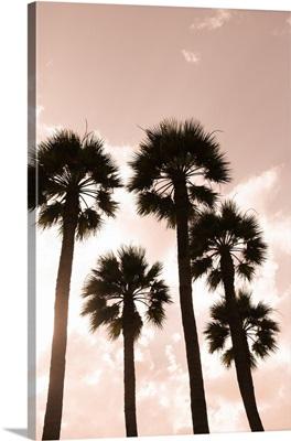 Palm Trees, Luxor, Egypt