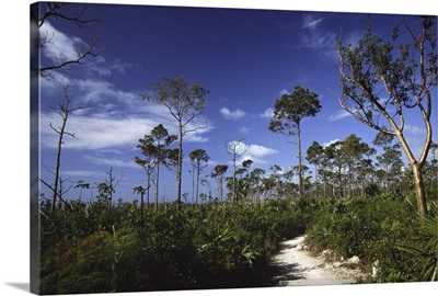Path in Lucayan National Park, Grand Bahama Island, Bahamas, West Indies