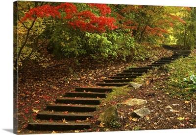 Path through a park in Autumn