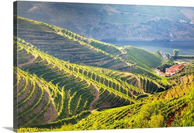 Portugal, Douro Valley, Terraced Vineyards lining the hills