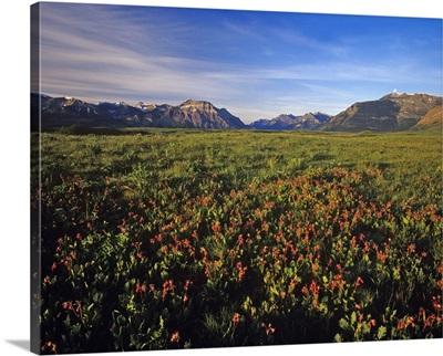 Prairie Smoke wildflowers in Waterton Lakes National Park in Alberta, Canada