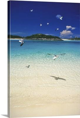 Pristine beach, Exuma Islands, Bahamas