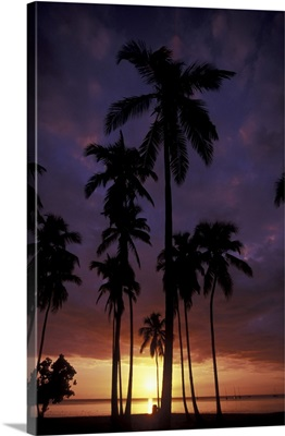 Puerto Rico, Palm trees at sunset