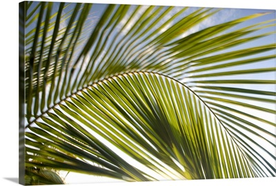Puerto Rico, Vieques. Palm fronds in motion