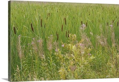 Quebec, Saguenay, Saint-Fulgence, Grasses and flowers next to the boardwalk