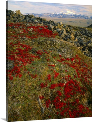 Scarlet foliage of bearberry, Mount Chamberlin and Romanozov Mountains
