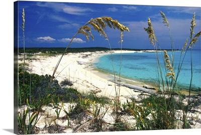 Sea oats on pristine beach, Long Island, Bahamas