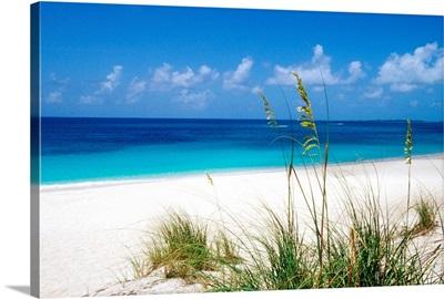 Sea oats, pink sand beach, Eleuthera Island, Bahamas