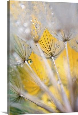 Seedhead with Raindrops