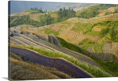 Seven Stars and Moon viewpoint, Dragon's Backbone Rice Terraces, China