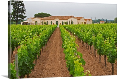 The Newly Renovated Chateau Petrus Seen Across Its Vineyards, Bordeaux, France