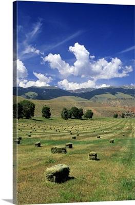 Timothy hay bales near Dubois, Wyoming