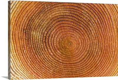 Tree rings, Stanley Park, British Columbia