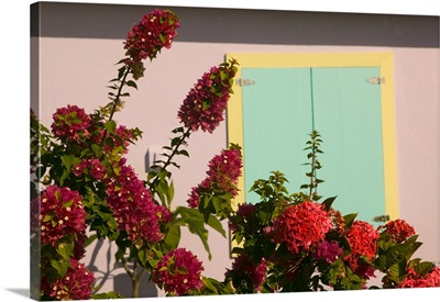 Turks and Caicos, Salt Cay Island, Balfour Town, colorful wall and flowers