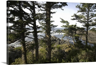 Wild Pacific Trail, Pacific Rim National Park Reserve, Ucluelet, BC, Canada