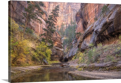 Zion National Park, Left Fork of North Creek, at the Subway