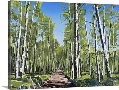 Aspen Forest, Telluride, Colorado