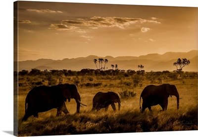 African Elephant Parade